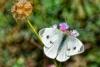 Ritratto di mariposa